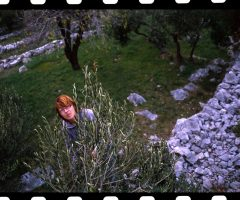 Nina-Dj-masline_glavna-fotka