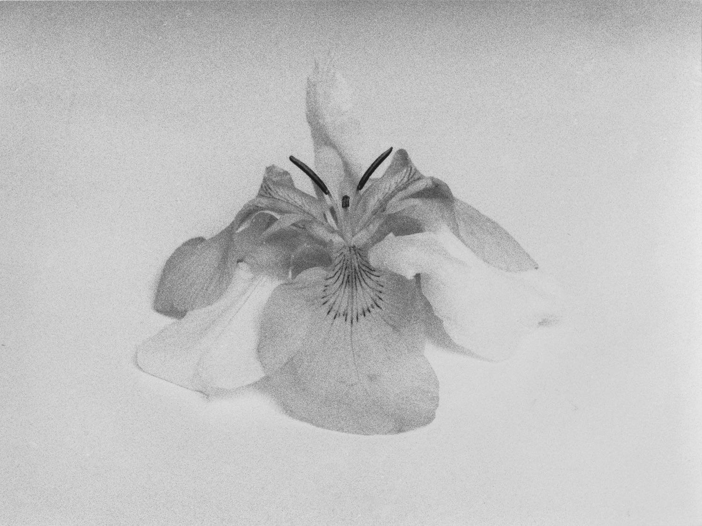 21_Untitled (Doubled Iris), 2015